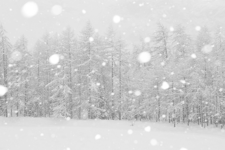 Snowstorm in gran paradiso national park valsavarenche nevicata nel parco nazionale del gran paradiso