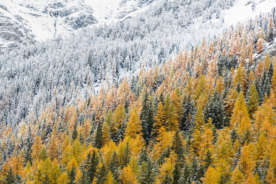 foliage alps marco ronconi nature photography wilderness aosta gran paradiso snow change of season nobody autumn fine art prints interior designcomposition canon 5d mark III HIKING outdoor wilderness vista panorama fotografia naturalistica paesaggio escursione escursionismo montagna alpi autunno