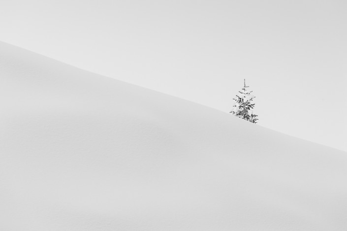 bonsai tree forest dolomites white snow minimalism minimal marco ronconi nature photographer mono black white winter fine art prints monochrome cortina path hiking outdoor wilderness fotografia naturalistica natura stampa fine art dolomiti minimalismo inverno selvaggio selvatico nessuno nobody