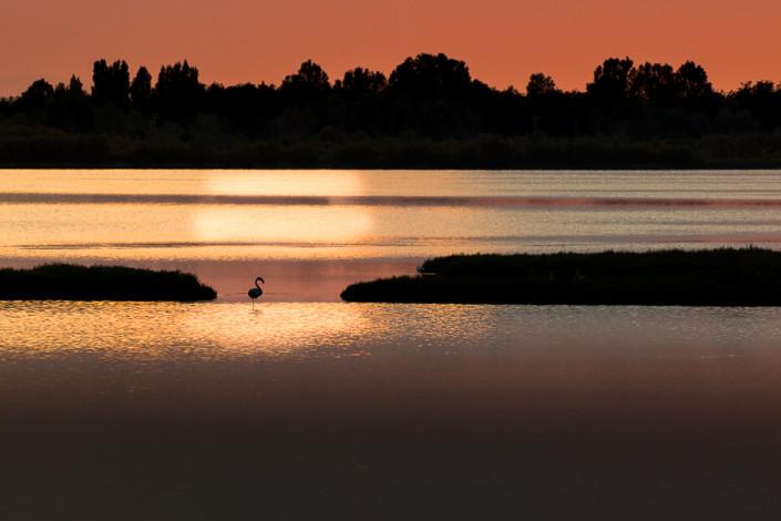 flamingo sunset po delta venice marco ronconi wildlife nature photography birds birdwatching fenicottero tramonto delta del po valli del delta natura fotografia naturalistica fineart selvaggio selvatico