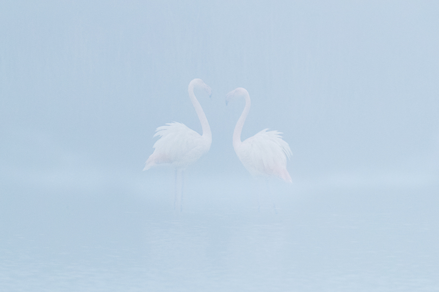 flamingos_one_in_front_the_other_site