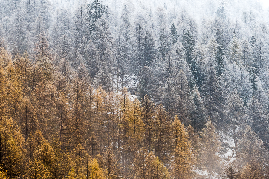 the change of seasons gran paradiso valsavarenche autumn winter autunno in valsavarenche colori autunnali parco del gran paradiso