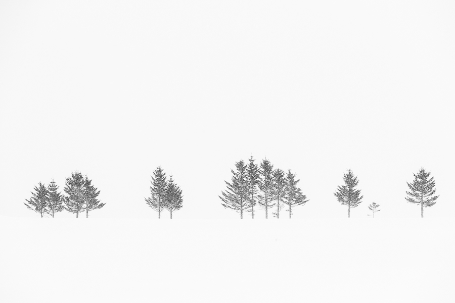 tree line in the snow hokkaido japan marco ronconi nature photography minimalistic alberi solitari nella neve hokkaido giappone marco ronconi fotografo natura fotografia naturalistica
