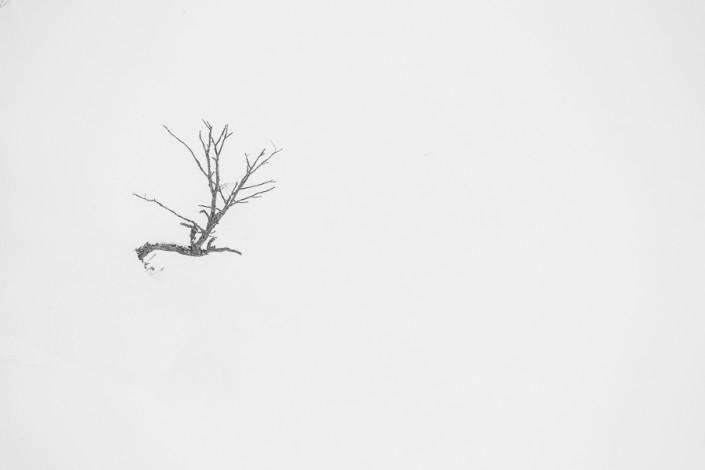 hokkaido lonely tree black white marco ronconi nature photography albero solitario hokkaido giappone bianco nero minimal