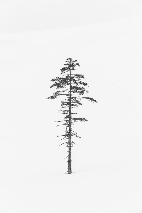 hokkaido lonely tree bw marco ronconi nature photography landscape minimalistic albero solitario giapponese paesaggio bianco nero giappone hokkaido