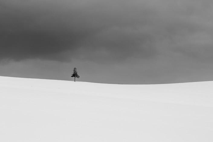 lonely tree in the snow hokkaido biei japan marco ronconi nature photographer albero solitario nella neve hokkaido biei giappone marco ronconi fotografo natura fotografia naturalistica minimalismo