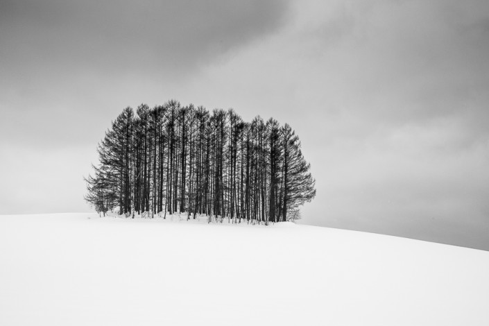 biei landscape trees hokkaido japan marco ronconi nature photohraphy paesaggio alberi biei hokkaido giappone minimalismo marco ronconi fotografo naturalistica natura