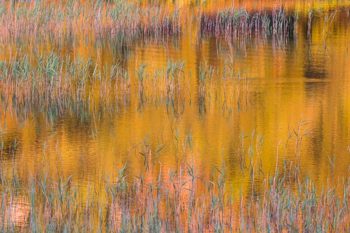 golden reflections mull island hebrides scotland marco ronconi nature wildlife photography riflessi dorati isola di mull scozia ebridi marco ronconi fotografo fotografia naturalistica natura sigma 500f4 sport
