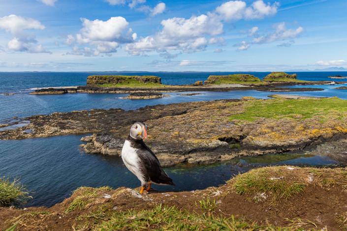 atlantic puffin panorama lunga island hebrides scotland marco ronconi willife nature photograhy pulcinella di mare panorama isola di lunga ebridi scozia marco ronconi fotografo natura fotografia naturalistica sigma 24105 art